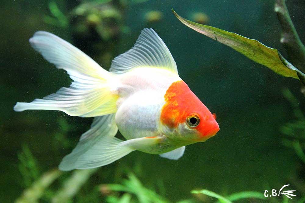 Poisson rouge jeux - Jeux de poisson rouge gratuit ...